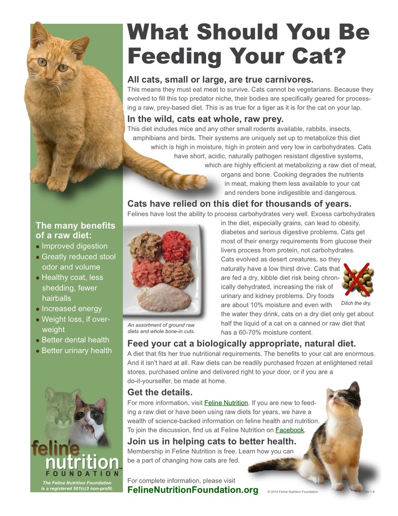 what should you be feeding your cat