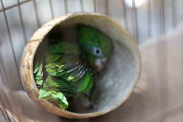 Ideal Humidity for Parrots