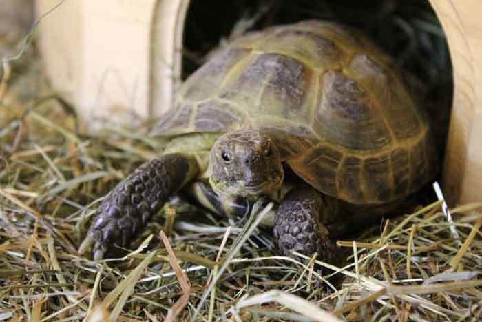 How to Increase Humidity in Tortoise Tank?