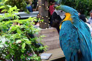 best humidifier for parrots
