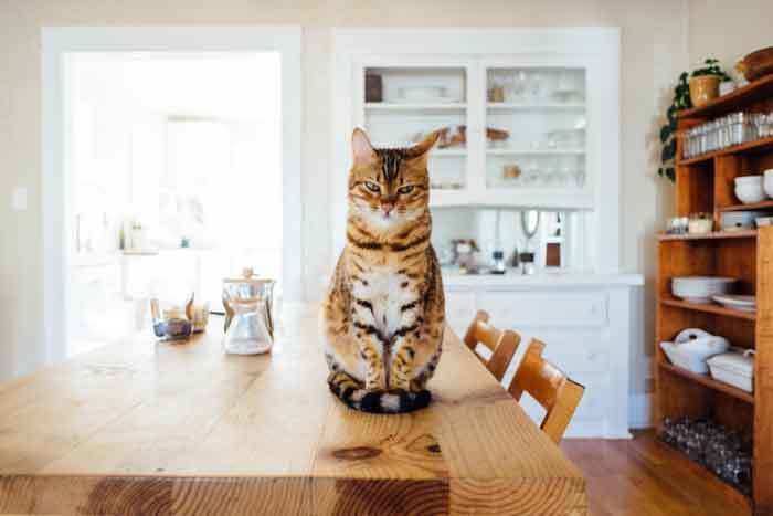 How to manage cat allergies?