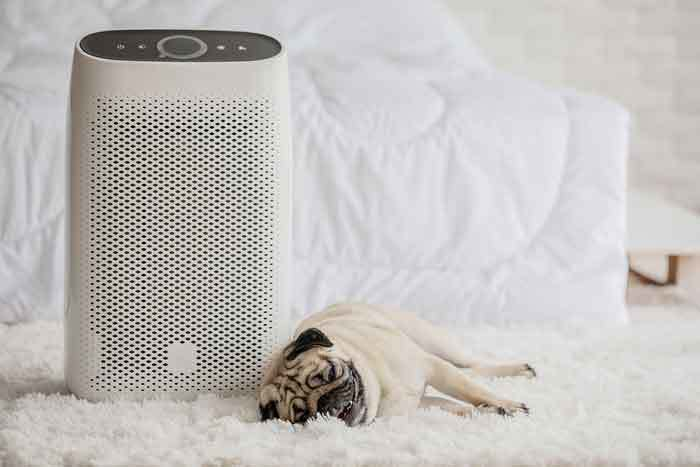 Best Humidifier for Dogs with Collapsed Trachea