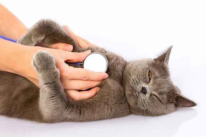 Best humidifier for cats with asthma